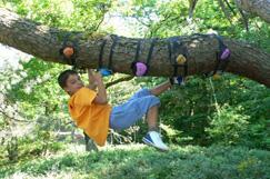Kind auf Baum klettern, Monkey klettern