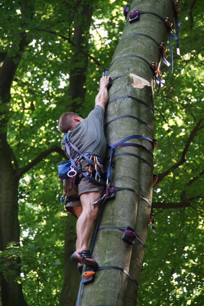 Baumklettern, Ausrüstung zum Baumklettern