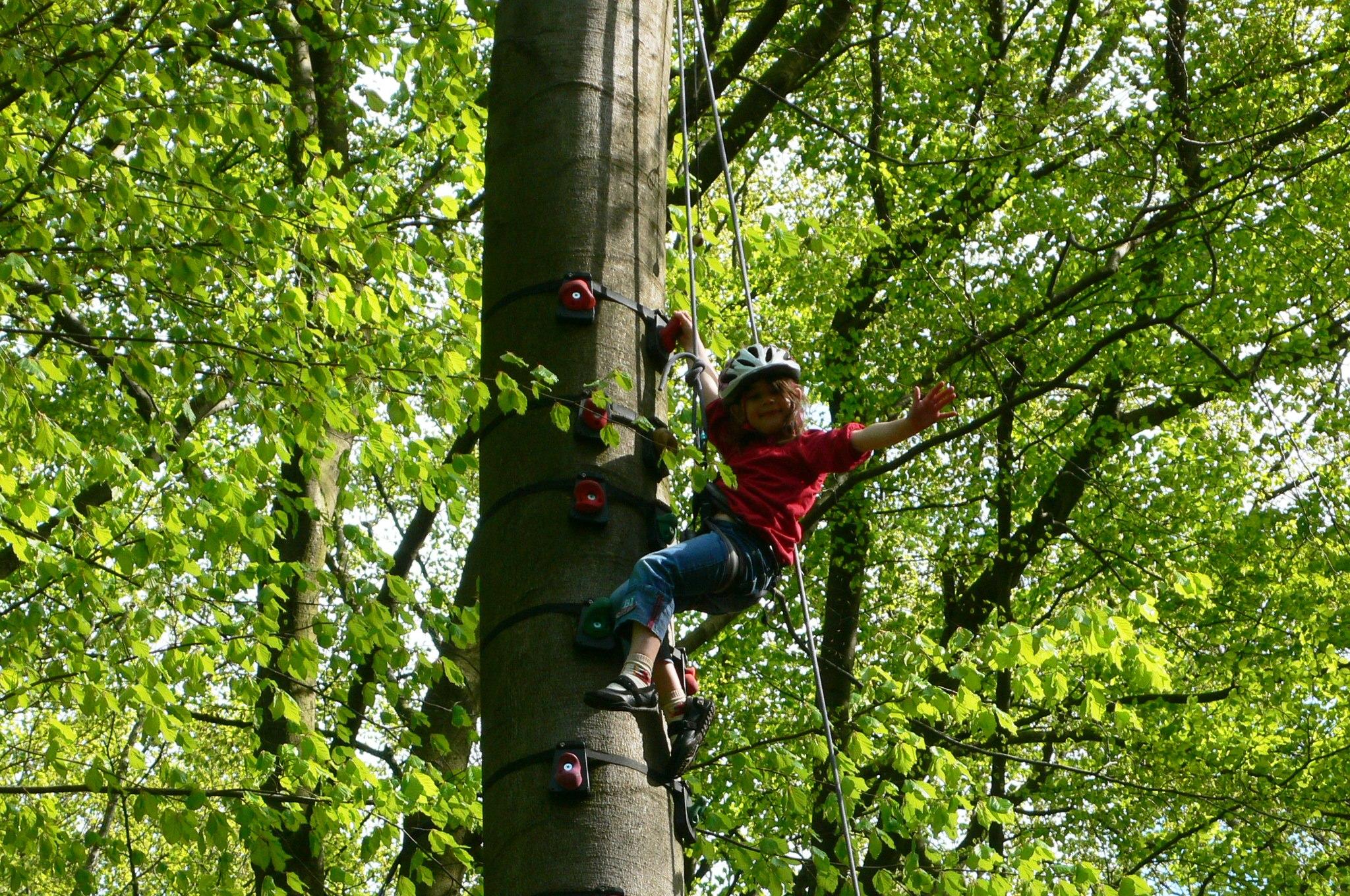 Kinder klettern im Baum, Kinder klettern spaß
